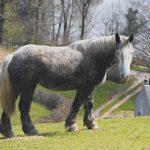 Серый конь стоит