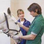 Обследование лошади