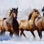 Табун бегущих лошадей