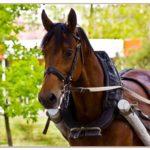 Хомут - необходимый аксессуар для лошади