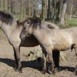 Древние породы лошадей