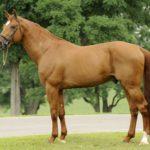 Конь светлой окраски