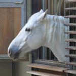 Светлый конь