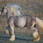 Конь пятнистой окраски