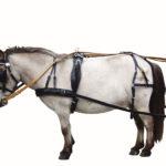 Лошадка в упряжи