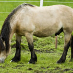 Лошадь пасется