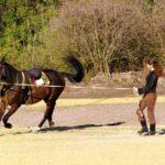 Физическая подготовка коня