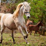 Молодая лошадка бежит