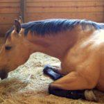 Лошадь с высокой температурой