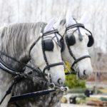 Закрытый вид щитков для глаз лошадей