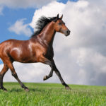 Молодой конь гнедой масти