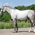 Светлая лошадь с красивым хвостом