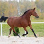 Лошадка бежит