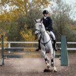 Конь для верховой езды в военном деле