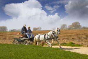 Лошадь в сельском хозяйстве