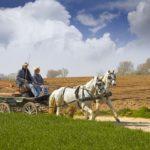 Лошади используются в сельском хозяйстве
