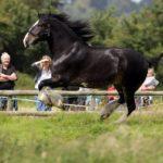 Черный конь бежит