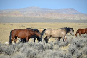 Предки лошадей