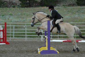 Конь породы фьорд