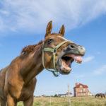 Форма зубов у лошади