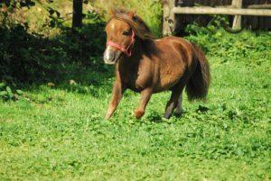 Красивая маленькая лошадка