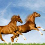 Средняя скорость молодых коней