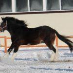 Конь караковый