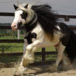 Пегая масть коня