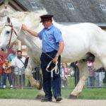 Крупный белый конь