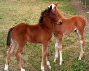 Имена для лошадей