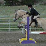 Фьорд на конных шоу