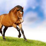 Конь передвигается иноходью