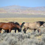 Современные приземистые виды лошадей