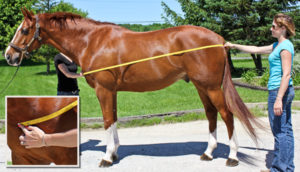 Измерение лошади