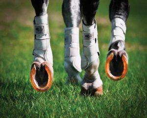 Подковка лошадей