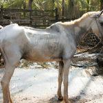 Худая лошадь из-за вирусной инфекции