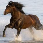Вороной конь бежит по берегу
