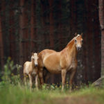 Потомство лошадей