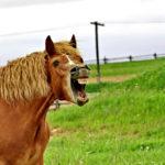 40 зубов у взрослого коня