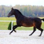 Лошадь бежит