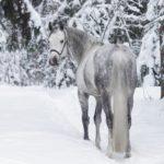 Конь с длинным хвостом стоит