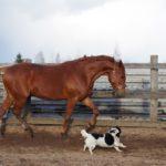 Рыжий окрас лошади
