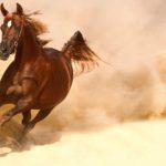 Конь бежит галопом