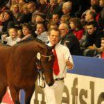 Голландская порода на соревнованиях