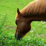 Конь с рыжей гривой пасется