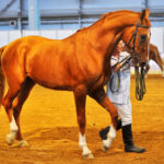 Дрессировка коня