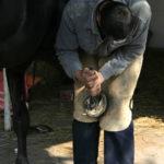 Расчищают копыто лошади