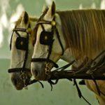 Наглазники лошадям