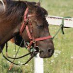 Сбруя для коня