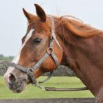 Рыжий окрас коня